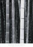Bamboo no 4  Kyoto