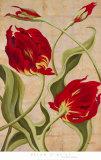 Tulip Tango II
