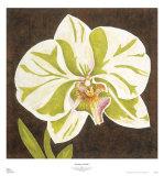 Surabaya Orchid I