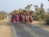 Collecting Firewood  Dhariyawad  Rajasthan  India