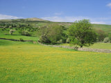 Wild Flower Meadow  Swaledale  Yorkshire Dales National Park  North Yorkshire  England  UK  Europe