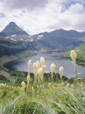 Beargrass  Hidden Lake and Mount Reynolds  Glacier National Park  Montana  USA
