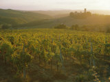 Vineyards and Ancient Monastery  Badia a Passignano  Greve  Chianti Classico  Tuscany  Italy