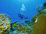 Underwater Diver and Corals  Cozumel Island  Mexico