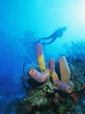 Coral Formations and Underwater Diver  Cozumel Island  Caribbean Sea  Mexico
