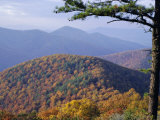 Autumn Forest Landscape Near Loft Mountain  Shenandoah National Park  Virginia  USA