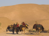 Kuchie Nomad Camel Train  Between Chakhcharan and Jam  Afghanistan  Asia