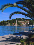 Promenade and Harbour  Cavtat  Croatia  Europe