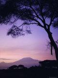 Sunrise  Mount Kilimanjaro  Amboseli National Park  Kenya  East Africa  Africa
