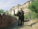 Elephant at the Amber Palace  Jaipur  Rajasthan State  India  Asia