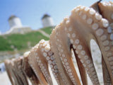 Octopus Drying in the Sun  Mykonos  Cyclades Islands  Greece  Europe