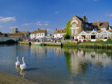 Swans on the River Frome  Wareham  Dorset  England  UK