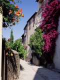 Brightly Coloured Flowers in Village Street  Grimaud  Var  Cote d'Azur  Provence  France  Europe