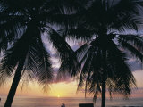 Tropical Sunset Framed by Palm Trees  Cayman Islands  West Indies  Central America