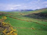 Fields Near Dingle  Co Kerry  Ireland/Eire