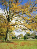 Cottages  Lyndhurst  New Forest  Hampshire  England  UK
