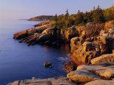 Rocky Shoreline  Acadia National Park  Maine  New England  USA