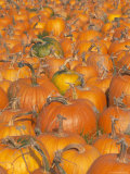 Pumpkins for Sale  Vermont Farm  Vermont  New England  USA
