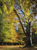 Autumn Colours  New Forest  Hampshire  England  UK
