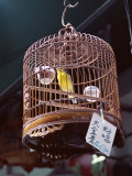 Caged Birds for Sale  Yuen Po Street Bird Garden  Mong Kok  Kowloon  Hong Kong  China  Asia