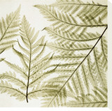 Ferns I