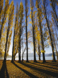 Autumnal Trees by Lake Wanaka  Otago  South Island  New Zealand