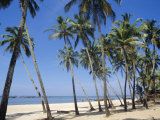 Palm Fringed Beach  Goa  India