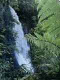 Waiere Falls Near Te Wairoa  North Island  New Zealand  Pacific
