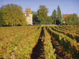 Vineyards  Aloxe Corton  Cote d'Or  Burgundy  France  Europe