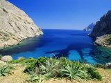 Bay Near Puerto Pollensa  Mallorca (Majorca)  Balearic Islands  Spain  Europe