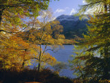 Autumn Trees at Ullswater  Lake District National Park  Cumbria  England  UK  Europe