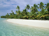Palms  White Sand and Turquoise Water  One Foot Island  Aitutaki  Cook Islands  South Pacific