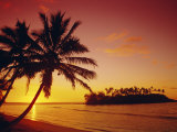 Silhouette of Palm Trees and Desert Island at Sunrise  Rarotonga  Cook Islands  South Pacific