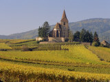 Church in Vineyards  Hunawihr  Alsace  France  Europe