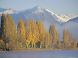 Autumnal Trees Beside Lake Wanaka  Otago  South Island  New Zealand