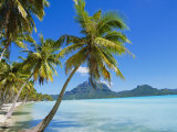 Palm Trees and Beach  Bora Bora  Tahiti  Society Islands  French Polynesia  Pacific