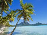 Palm Trees and Beach  Bora Bora  Tahiti  Society Islands  French Polynesia  Pacific