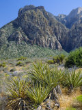 Spring Mountains  15 Miles West of Las Vegas in the Mojave Desert  Nevada  USA