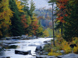 White Mountains National Forest  Near Jackson  New Hampshire  USA