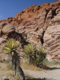 Red Rock Canyon  Spring Mountains  Mojave Desert  Near Las Vegas  Nevada  USA