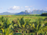 Mauritius  Scenic in the North West Region of the Island