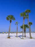 Palms and Beach  Clearwater Beach  Florida  USA