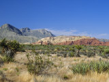 Red Rock Canyon  Spring Mountains  15 Miles West of Las Vegas in the Mojave Desert  Nevada  USA