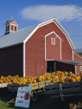 Pumpkins for Sale in Front of a Red Barn  Vermont  New England  USA