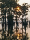 Atchafalaya Swamp  'Cajun Country'  Louisiana  USA