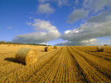 Hay Bales Near Contin  Highlands Region  Scotland  UK  Europe
