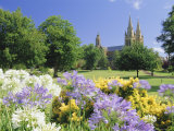 Agapanthus Flowers and St Peters Anglican Cathedral  Adelaide  South Australia  Australia