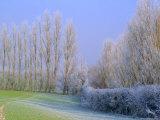 Hoar Frost on Trees in Kent  England