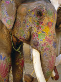 Painted Elephant  Close up of Head  Jaipur  Rajasthan  India