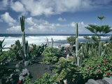 Garden by the Atlantic Ocean  El Golfo  Lanzarote  Canary Islands  Spain  Europe